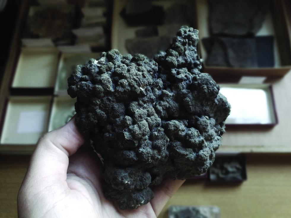 Stromatolite fossilisée de Shark Bay, Australie. Échantillon provenant de la collection du Laboratoire de Géologie du CRNS, de Lyon.